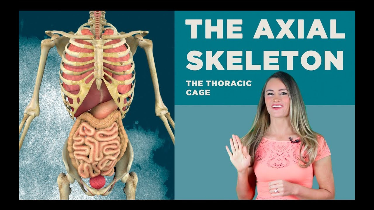 The Thoracic Cage The Rib Cage Youtube
