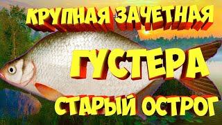 русская рыбалка 4 Густера Старый Острог рр4 russian fishing 4 rf4 фарм Алексей Майоров