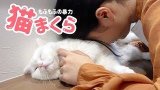 猫まくらの注意点は稀にもふ毛が鼻に入ってくしゃみが出ることです!み...