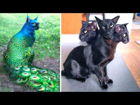Одни на Миллиард! Самые Редкие Кошки в Мире