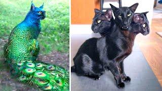 Одни на Миллиард Самые Редкие Кошки в Мире