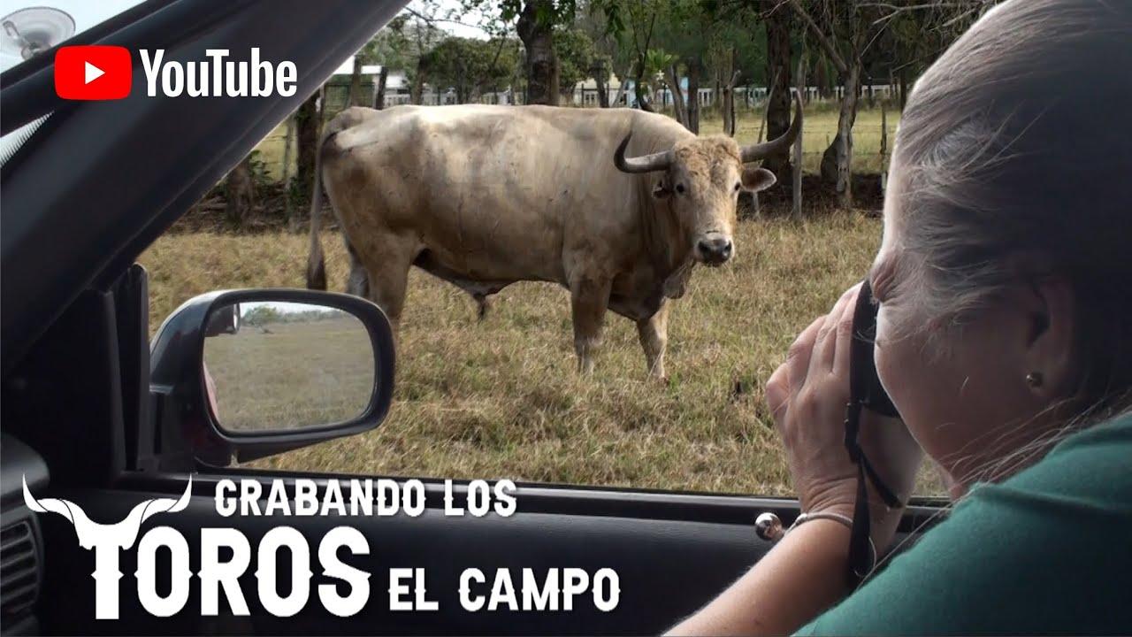 Detras de camara grabando y tomando fotos a los Toros en el Campo.