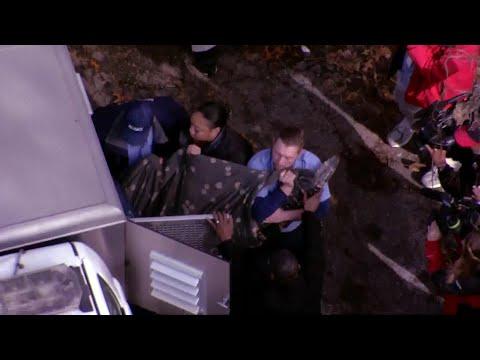 Chris Proctor - Landlord Finds Gator In Hot Tub