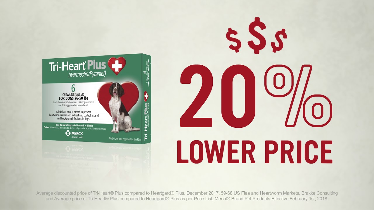 Heartgard Plus For Dogs 26 50 Lbs The Best Dog 2018