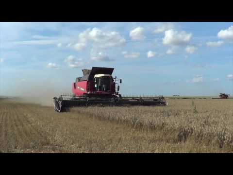 2016 Wheat Harvest with Brennan Davis Custom Harvesting in Munday Texas