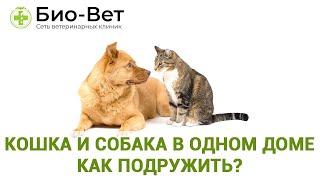 Кошка и собака в одном доме. Как подружить?