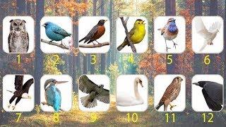 Mira lo que el pájaro de tu mes del nacimiento revela sobre cómo eres y cómo te ven los demás