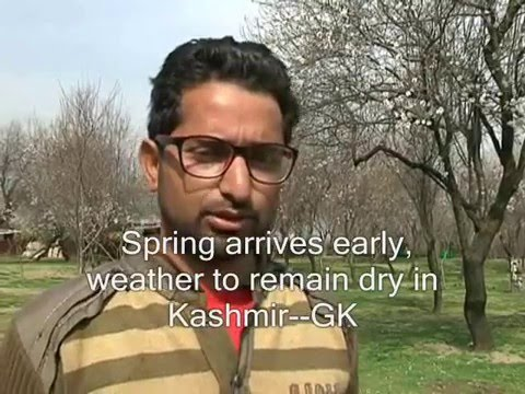 Spring arrives early, weather to remain dry in Kashmir-