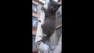 Продам котят 0662718218 Светлана Днепропетровск