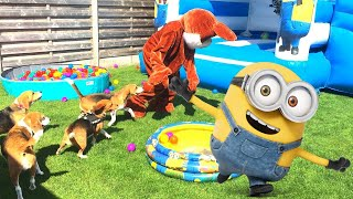 Funny Beagle Dogs Having a Minion Themed Birthday Party
