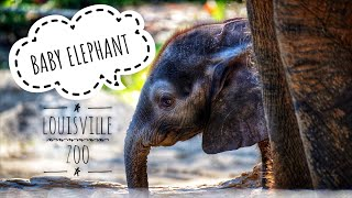 Awww! Louisville Zoo & the New Baby Elephant 🐘 || #RVLife