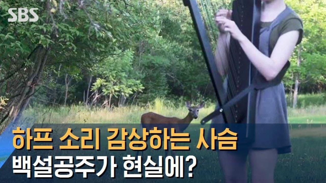 백설공주 실사판?…초록빛 숲서 하프 연주 듣는 사슴 / SBS