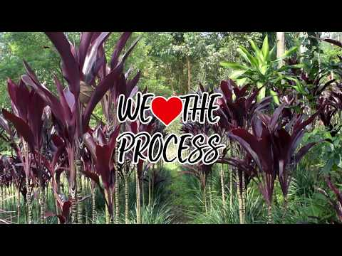 FOLIAGE AND FLOWERS PROCESS - Foliages and Tropical Flowers of Colombia