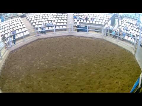 CQLX - 2 October 2017 - Stud Cattle Sale - Day 3