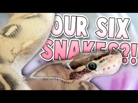 That's A Lot of Snakes! | Family Baby Vlogs