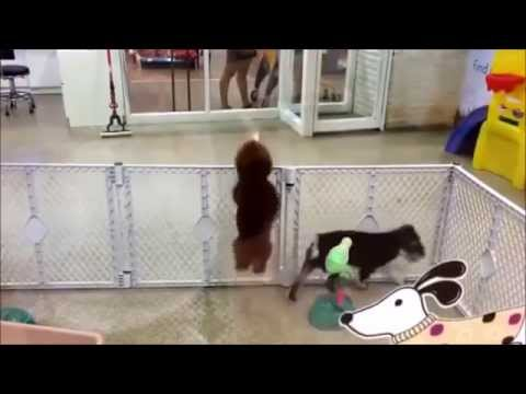 Dancing Jumping Excited Puppy
