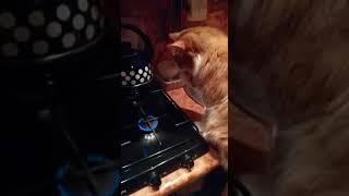 Рыжий Кот жарит лапу