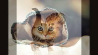 Топ самые милые фото котят♡♡♡¿