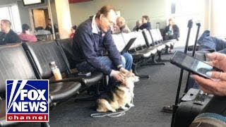 Corgi comforts stranger who recently lo...