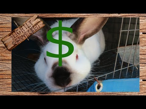 Making a Profit With Meat Rabbits? - The SR Rabbit Update 6-27-17