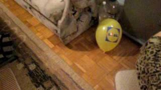 Crazy dog Benito