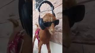 Dog Video Song Hindi