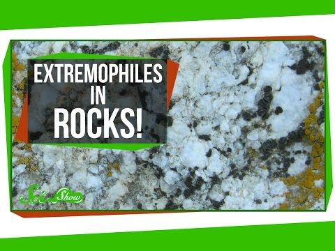 Tiny Extremophiles Living in Rocks!