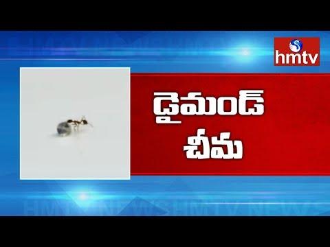 వజ్రాల షాపులో దొంగ చీమ | Ant Stealing a Diamond | Telugu News | hmtv