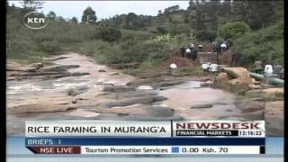 Murang'a farmers to engage in commercial rice farming