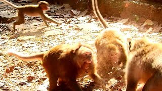 Terrify!!!! Luky fight April's family seriously until baby frighten nearly faint, Mum protect baby 2