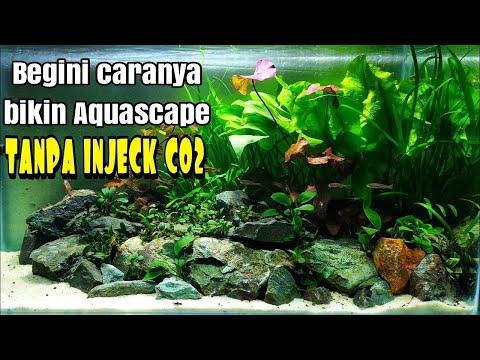 #43 Aquascape tema natural tanpa injeck Co2