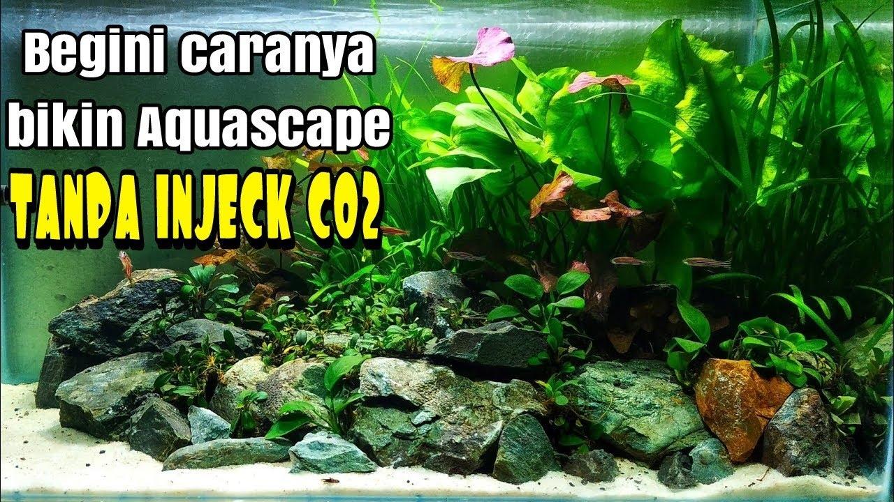 #43 Aquascape tema natural tanpa injeck Co2 - YouTube
