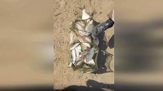 ДЕНЬ 3 РЫБАЛКА В АСТРАХАНИ на реке АХТУБА ловля на фидер разновидности рыб приколы музыка