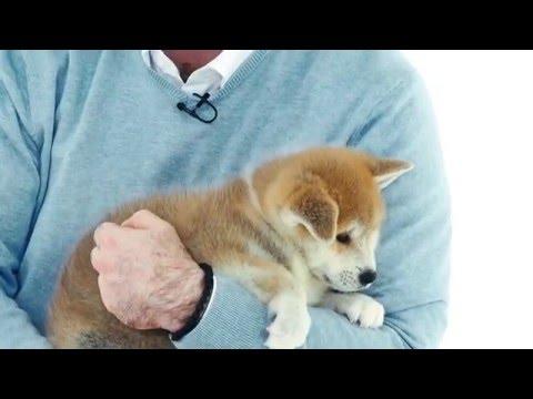 Как часто нужно гулять с собакой