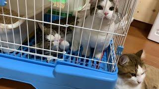 ひのき家最後の避妊手術に向かう猫