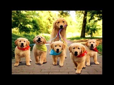 Самые красивые и ласковые собаки в мире