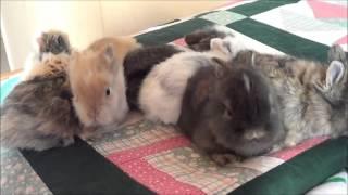 Baby bunnies - 22 days old