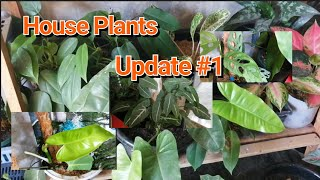 House Plant Update #1 By Lola Malyn