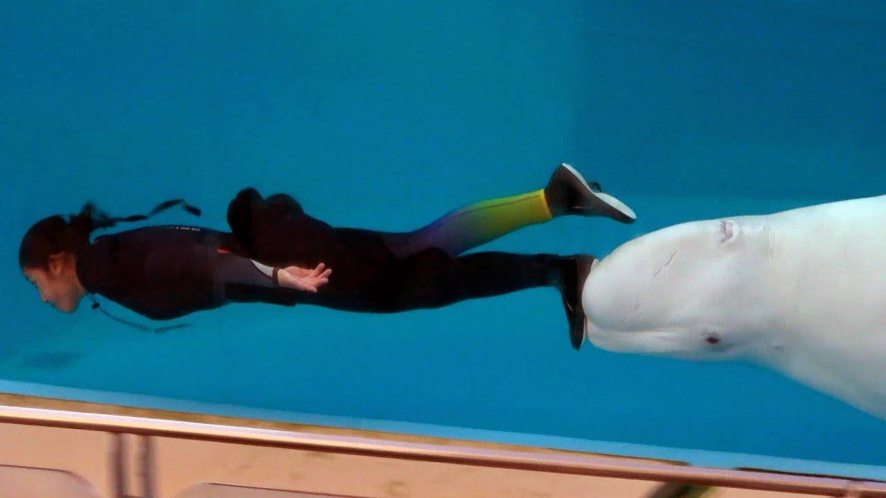 Beluga Whale Night Show at Yokohama Hakkeijima Sea Paradise 【4K】
