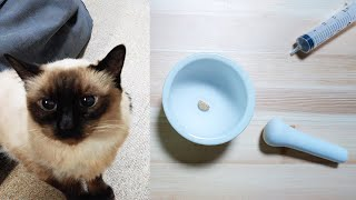 The Best Way to Pill a Difficult CAT (My Method) Curry the Cat