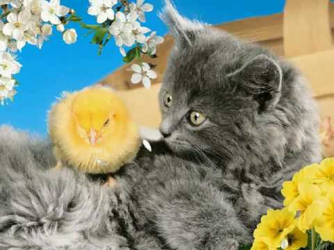 adorable pets screensaver youtube