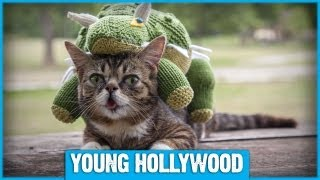 Lil Bub the Cat at Young Hollywood