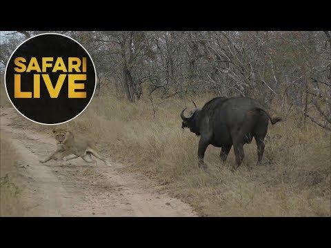 safariLIVE - Sunset Safari - July 19, 2018