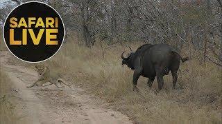 safariLIVE - Sunset Safari - July 19, 2018
