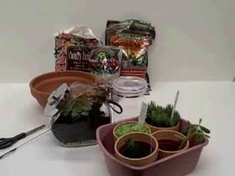 Terrariums For Kids Youtube