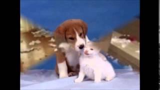 Мой фильм про собак