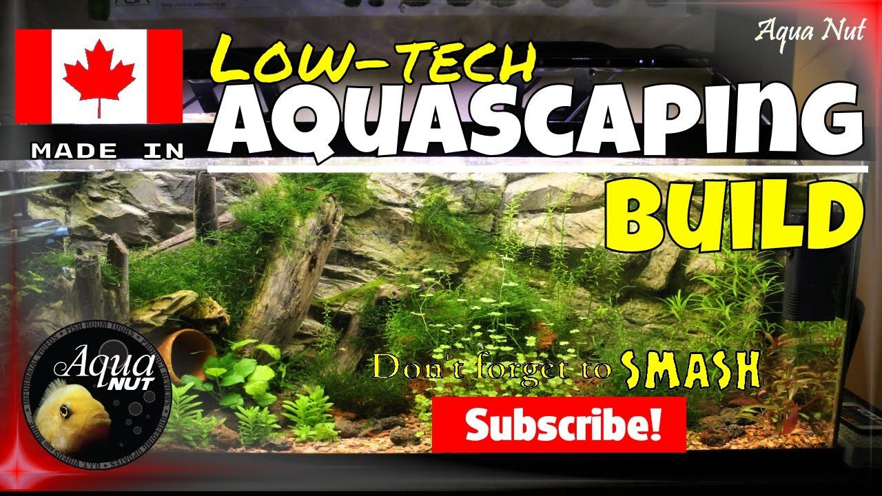 Step by Step Aquascaping Tutorial Guide PT 1| Planted ...