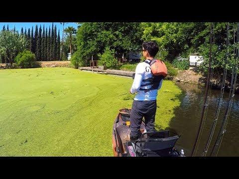 Frog fishing Paradise