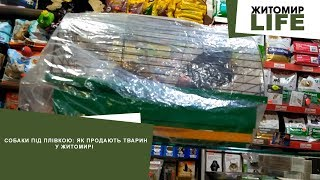 Собаки під плівкою як продають тварин у Житомирі