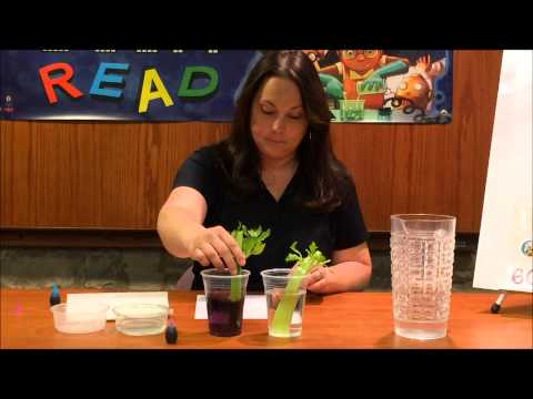 Science in 60 Seconds: Capillary action